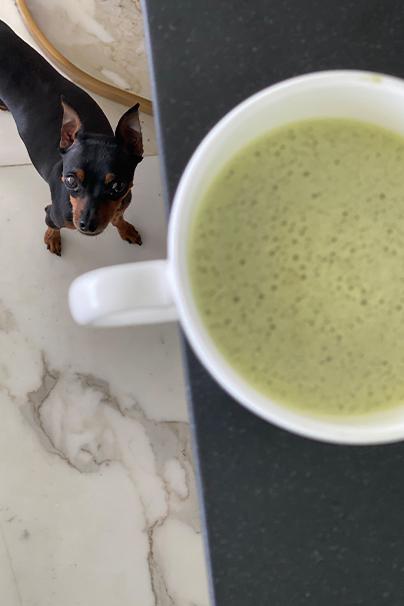Matcha Latte and Dog